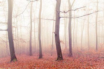 Herfstbos van Lavieren Photography
