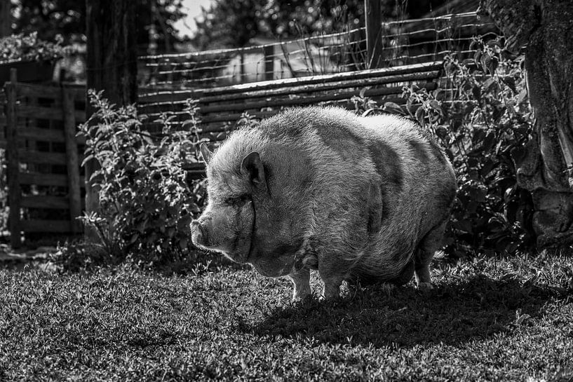 Hängendes Bauchschwein von Rob Boon