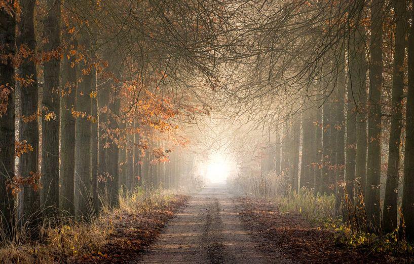 Weg naar het licht van Peschen Photography