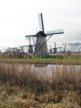 Windmühlen in Kinderdijk, die Niederlande. von Liset Verberne