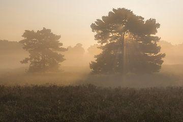 Sunwheel trees van Francois Debets