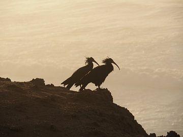 Vogels in de zonsondergang van Daniela Rösch