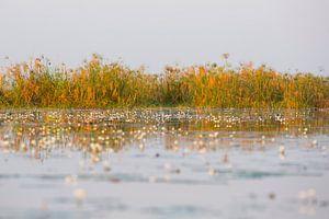 Reflectie op de okavangodelta rivier water