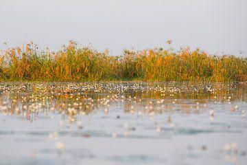 Reflectie op de okavangodelta rivier water van