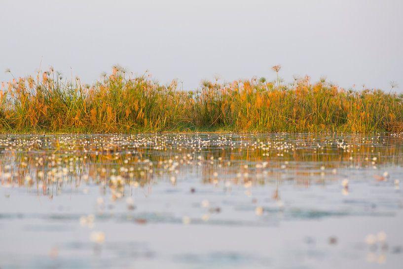Reflectie op de okavangodelta rivier water van Dexter Reijsmeijer