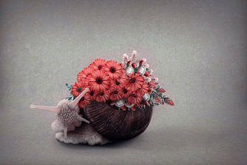 Eine elegante Schnecke von Elianne van Turennout