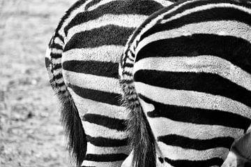 Zebra van Yvette Meijer