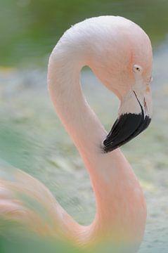 Mooi roze van Mark Bolijn