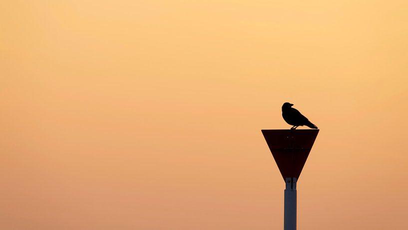 Schwarzer Vogel von Kirsten Warner