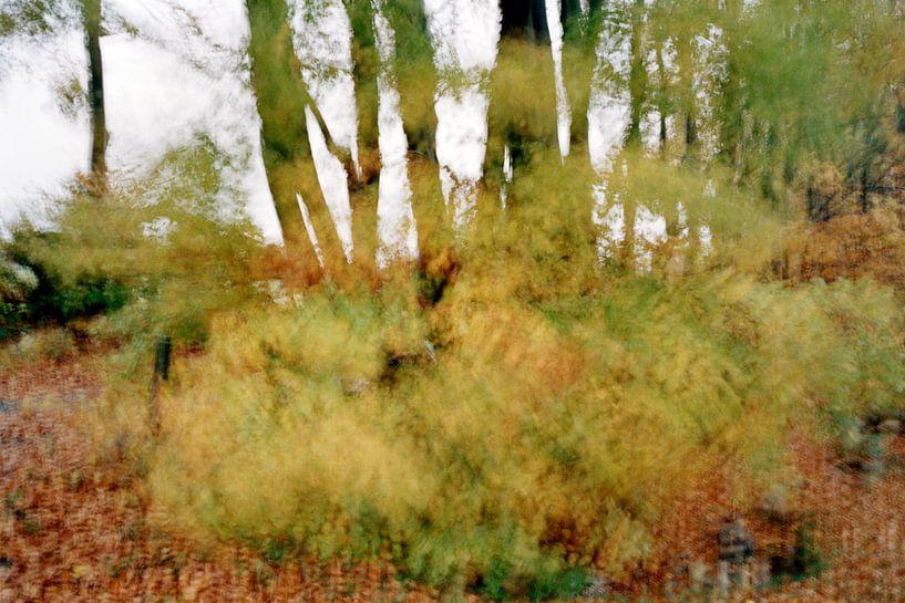 Ovifat, België van Christiaan Krouwels