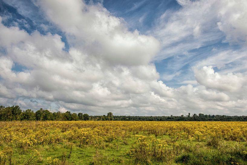 Natuurpark  het Dal van de Roode Beek van John Kreukniet