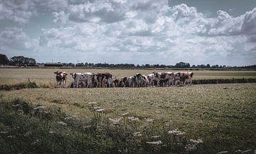 Kühe auf der Wiese von Jadey Smit