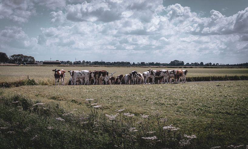 Koeien in de wei van Jadey Smit