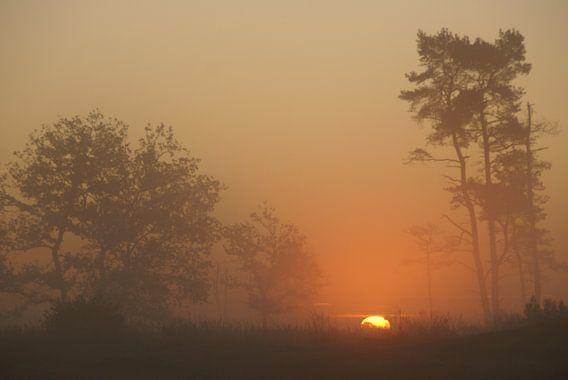 zonsopgang in de Loonse en Drunense Duinen, met de silhouetten van bomen van Robert Pors