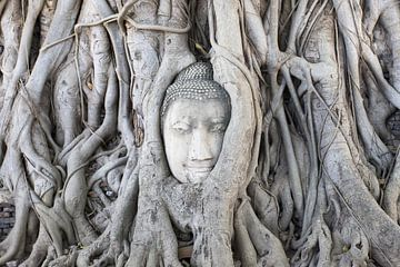 Boeddha in Ayutthaya von Antwan Janssen
