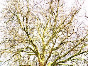 Tree Magic 110