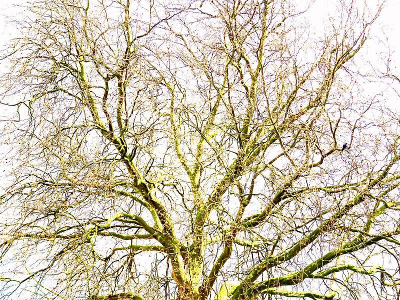 Tree Magic 110 van MoArt (Maurice Heuts)