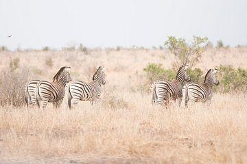 Zebra's von Riana Kooij