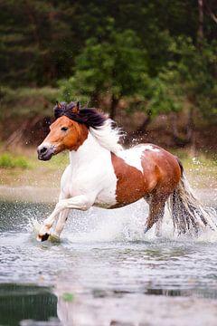 pony galoppeert door het water van Vera Sijpkes