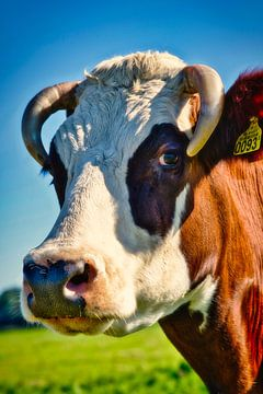 Ein Kuh-Porträt von Wendy Tellier - Vastenhouw