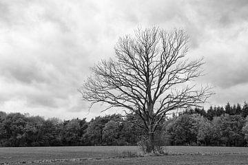Eenzame boom van Ooks Doggenaar
