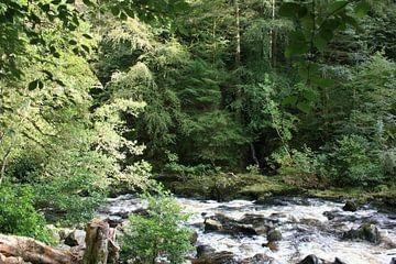 Die Eremitage, Dunkeld, Schottland 4 von Floortje Mink