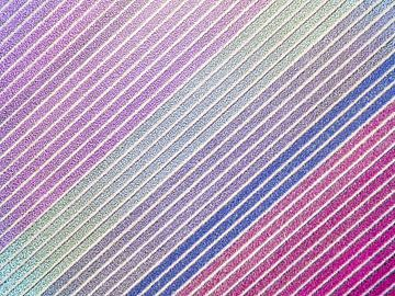 Diagonale hyacinten van Fotografie Egmond