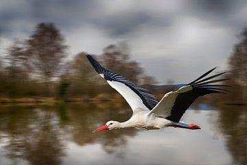 Stork in flight - No. 5 van Ursula Di Chito