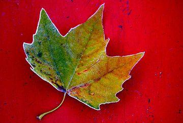 Herfst Blad op rood. van Hans Jansen