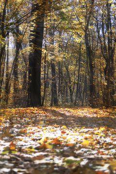Goldener Herbst van zwergl 0611