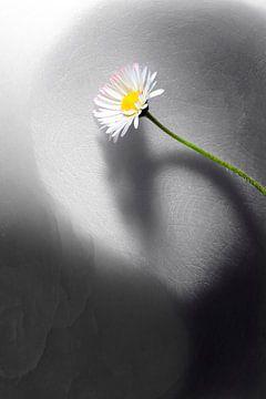 Gänseblümchen auf Marmorstein von Tobias Majewski