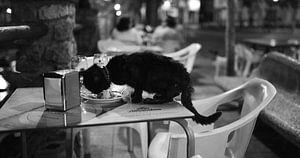 Kat in Malaga Zuid Spanje van
