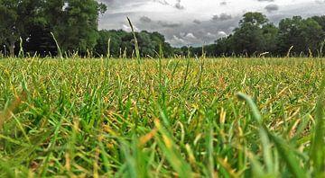 Zuiderpark vanuit insectperspectief van Rinke Velds