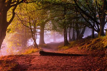 Promenade colorée bordée d'arbres à Posbank, dans le parc national de Veluwezoom sur Gea Gaetani d'Aragona