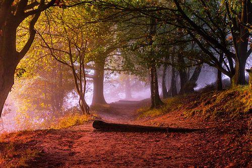 Met bomen omzoomde herfst gekleurde promenade in Posbank, Nationaal Park Veluwezoom van Gea Gaetani d'Aragona