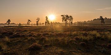 Nationaal park De Loonse en Drunense Duinen - 1 van Nuance Beeld
