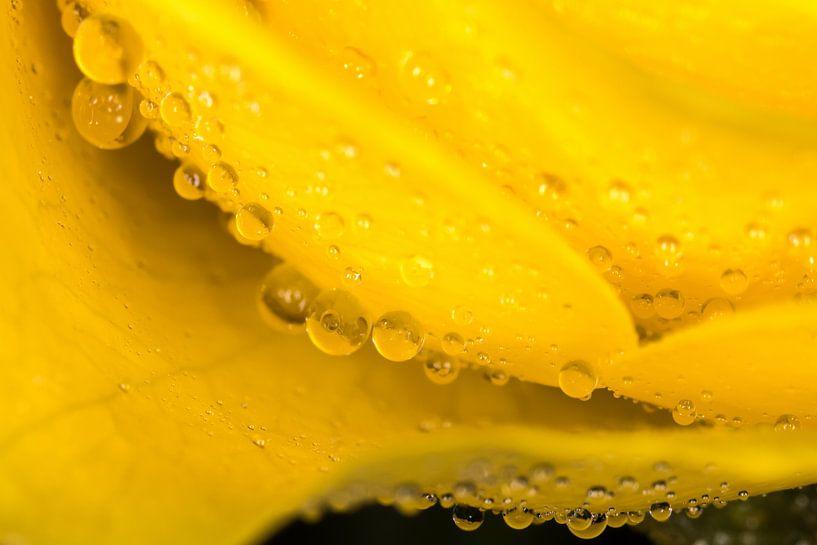 Yellow drops van Nildo Scoop