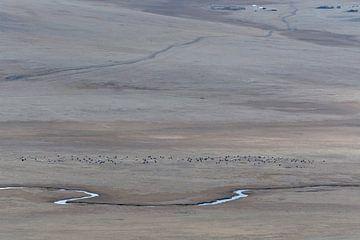 Weitläufige Landschaften in der Mongolei von Nanda Bussers