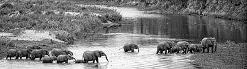 olifanten steken de rivier over in afrika van Ed Dorrestein