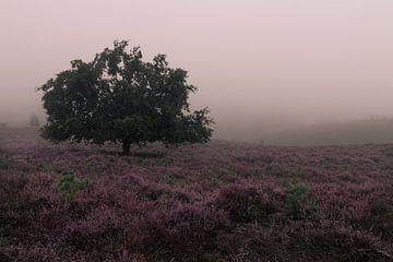 Heide in de Mist van Nuance Beeld