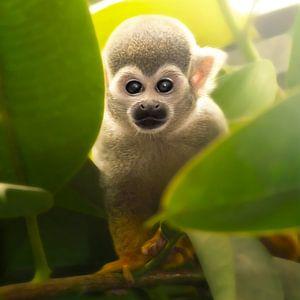 baby monkey van