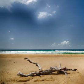 arbre mort sur la plage sur Ed Dorrestein