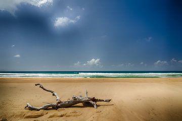 dode boom op het strand van Ed Dorrestein