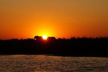 Olifanten in de zon van Erna Haarsma-Hoogterp
