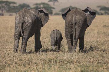olifantengezin van anja voorn