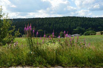 Eifellandschap Schoenfeld Stadtkyll van Susanne Seidel