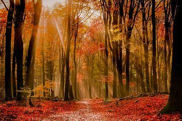 herfst sur Jeannette Bouwmeester