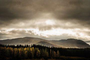 Landschap in Schotland met dennenbomen van RUUDC Fotografie