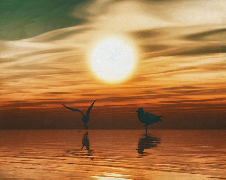Meeuwen bij zonsondergang van Jan Keteleer