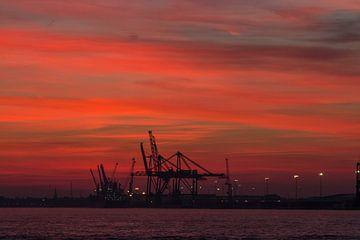 The Red Morning van Stefan Dhondt